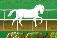 Pferde Rennen Herausforderung
